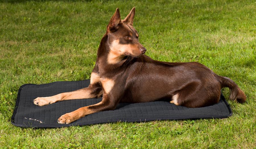 Back on Track (Dog) DOG BED QUILTED-0