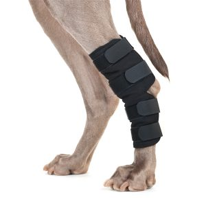 Back on Track (Dog) HOCK BRACE-0