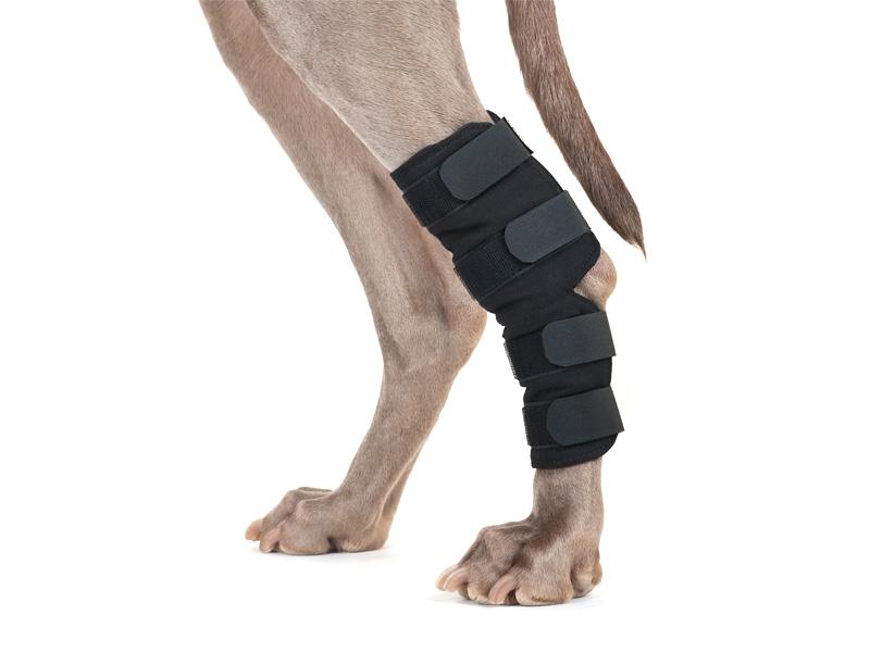Back on Track (Dog) HOCK BRACE | K9-Massage.co.uk