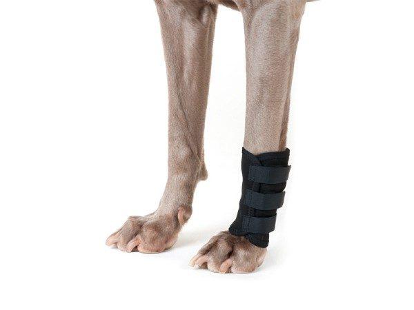 Back on Track (Dog) LEG BRACE-0