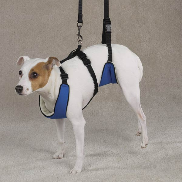 Harness Reviews Dog