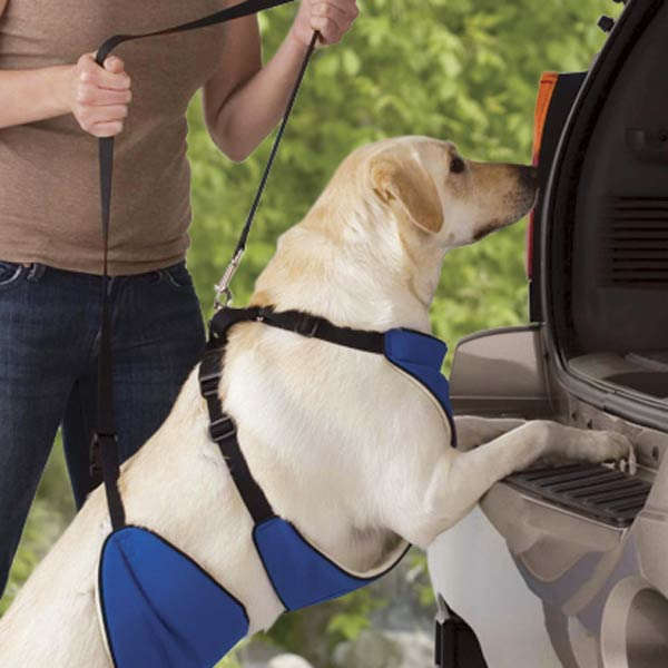 Topdog SUPPORTRx HARNESS-200