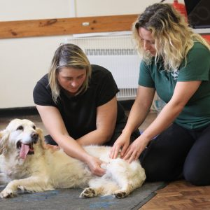 K9 MASSAGE FOR AGILITY AND SPORTING DOGS WORKSHOP-0