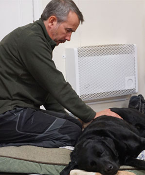 black_labrador_with_arthritis
