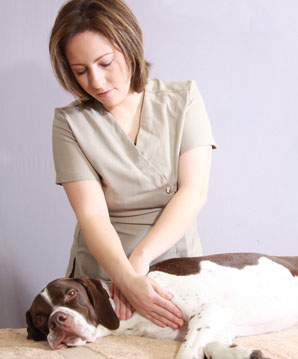 canine-massage-and-canine-behaviour_nervous