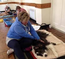 canine_massage_workshops
