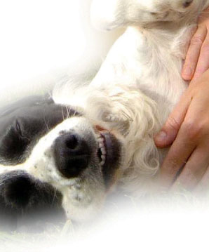 dog_massage_helps_mobility